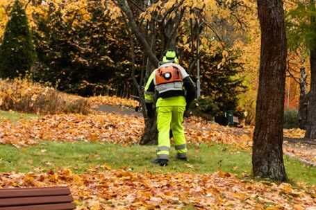 Commercial lawn maintenance- spring and fall